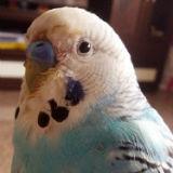 鸚鵡眼中的天下事