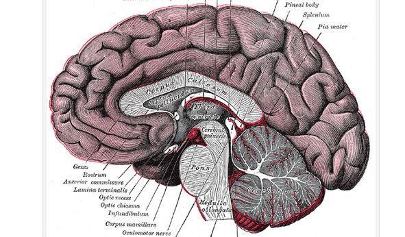 左右腦思考的人該怎麼發揮長處?