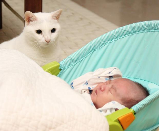 有「貓」的孩子像個寶
