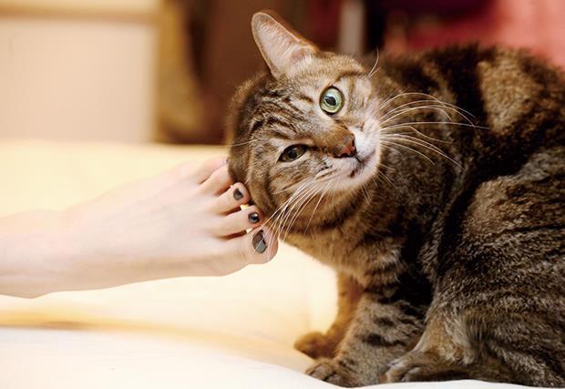 貓是世界上最凍齡的動物