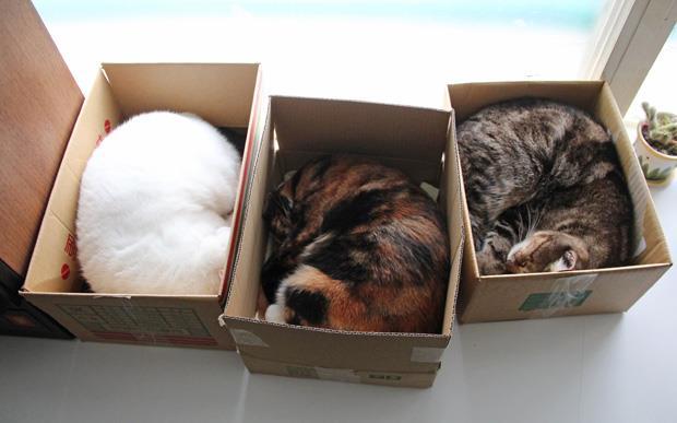 這不是「箱」民,什麼才是「箱」民?
