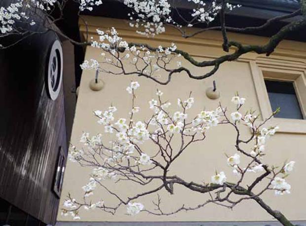 美女老外加失傳老酒,讓300年日本老酒莊變身時尚新寵