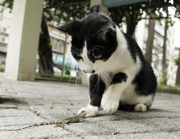 好奇殺死的不是貓,而是其他小動物