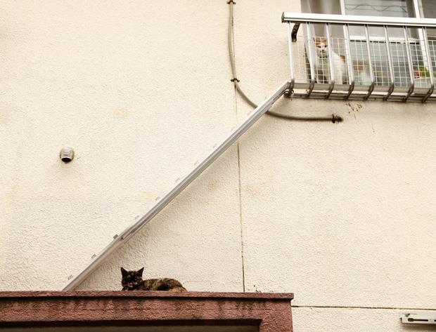 城市進步指標:你家社區有貓樓梯嗎?
