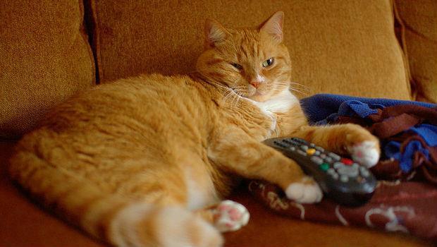 想抵制某些電視台,你以為不看就好了嗎?