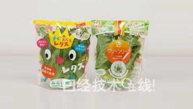 每天生產一萬棵蔬菜!日本最大蔬菜工廠啟動