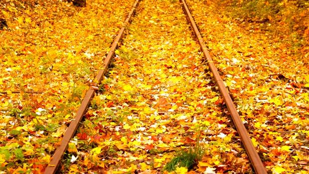 落葉會造成行車危險!荷蘭火車頭竟安裝「雷射砲」轟爆它們