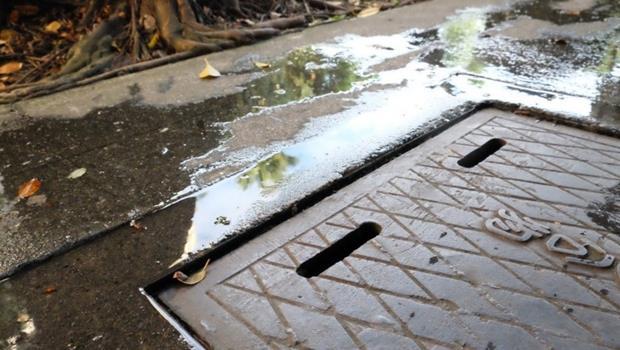 不愛髒水溝...埃及斑蚊其實很愛乾淨》消滅孑孓預防登革熱,先搞懂這6件事