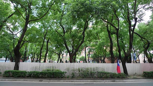 別再盲目「綠化城市」了?英伯明罕大學教授:「種樹」可能讓都市空氣品質惡化