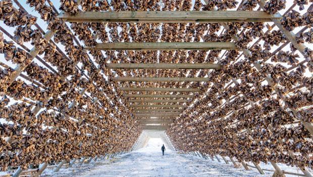 掛滿鱈魚頭的巨大風乾魚架(Hjell),是羅弗敦群島漁村的特色。