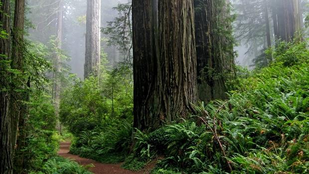 能預警火災或洪水!美國出現20處「智慧森林」,用物聯網保護樹木們