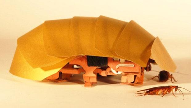 果然是打不死的蟑螂!美國最新研發「機器蟑螂」能承受體重900倍重量,還能「救災」