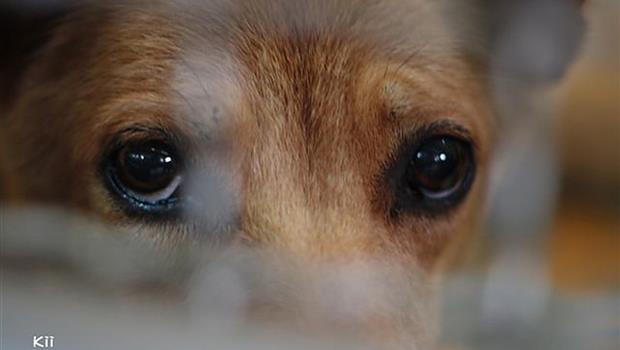 動保園長死諫「收容所都是苦難」...這篇告訴你:為什麼結紮無法減少流浪動物?