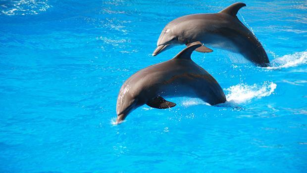 海豚推人、騎海豚...是違反天性的生態浩劫》為什麼我堅決反對圈養的「動物展演」?