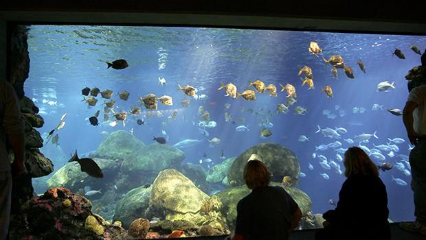 白海豚滅絕、藻礁污染嚴重...紀錄片導演柯金源:看看真實的海洋,不要看水族箱