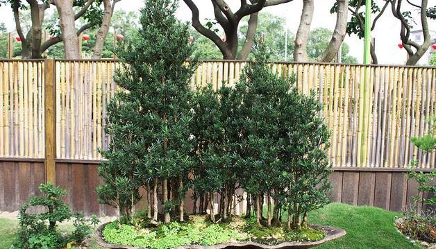 中國式奇蹟?》7名員工的小公司,賣60多棵樹,收入就超過五千萬!