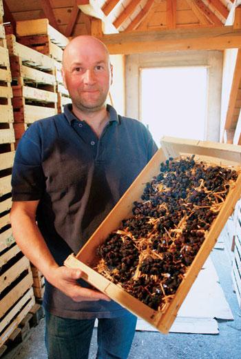 侏羅區特產之一的麥稈酒,釀造的葡萄須經過長達3個月的自然風乾後,才能榨汁和發酵。