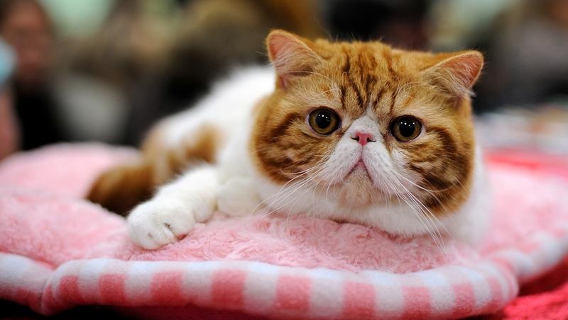 快來幫朕鏟屎啊!網友公認10大症狀,來看你的「貓奴」指數有多高?