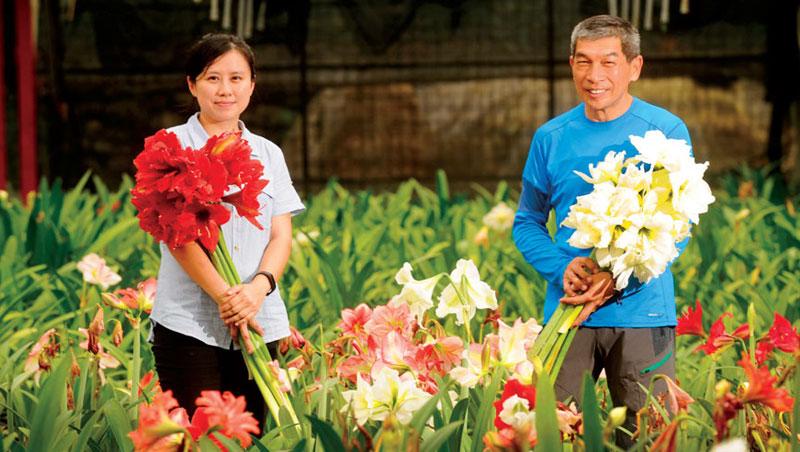 楊雅茵( 左) 回憶父親為孤挺花育種花了20 年時間,才找到量產竅門。楊德麟(右)說:「看準目標,不停學習」是其最大體悟。
