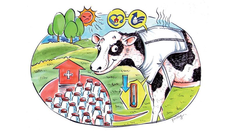乳牛夏季追奶神器:灑水涼感衣