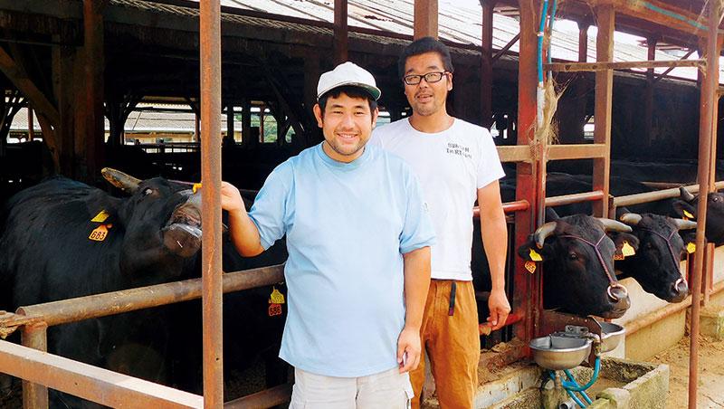 目前日本的黑毛和牛,多以小型養殖戶、圈養為主。