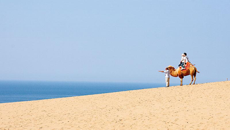 在鳥取沙丘能做的事可多了。滑沙、騎駱駝,甚至乘滑翔傘飛行。