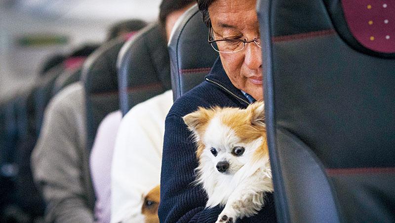 寵物商機大!今年初,日本首架寵物包機「汪汪」啟航,超過30組主人帶毛小孩搭機同遊鹿兒島,全程還有獸醫陪同。