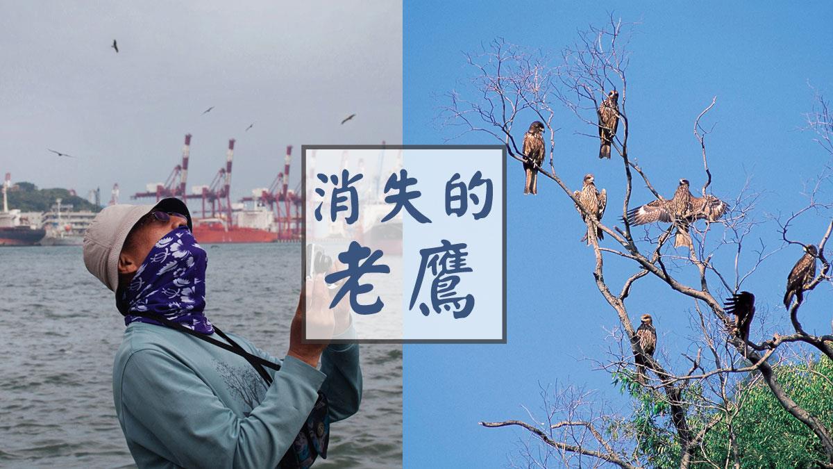 從《消失的老鷹》看台灣的生態未來