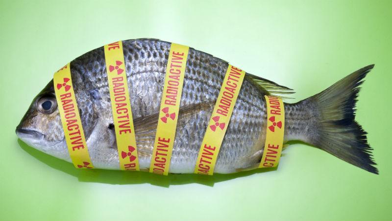 吃含有輻射物質食品,就像吃癌細胞?台大公衛教授:吃什麼都有「輻射物」