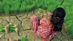 權威報告指出 全世界對氣候危機幾乎毫無準備