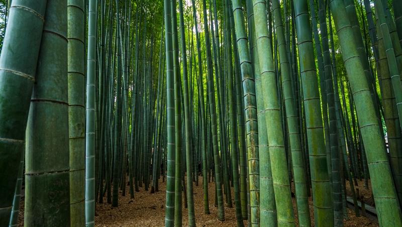 小業務翻身、62歲退休創業,76歲日本阿伯靠「竹子新事業」開創第二人生