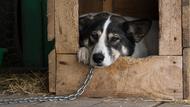 限時遛狗、不得擾民、積分扣點…在陸養狗比養車還難
