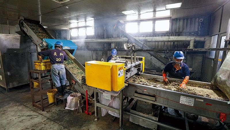 六輕南亞廚餘廠的工人,正用肉眼挑選機器無法剔除的廚餘雜質,他們說常有瓶蓋、菜瓜布甚至菸屁股混在裡面。