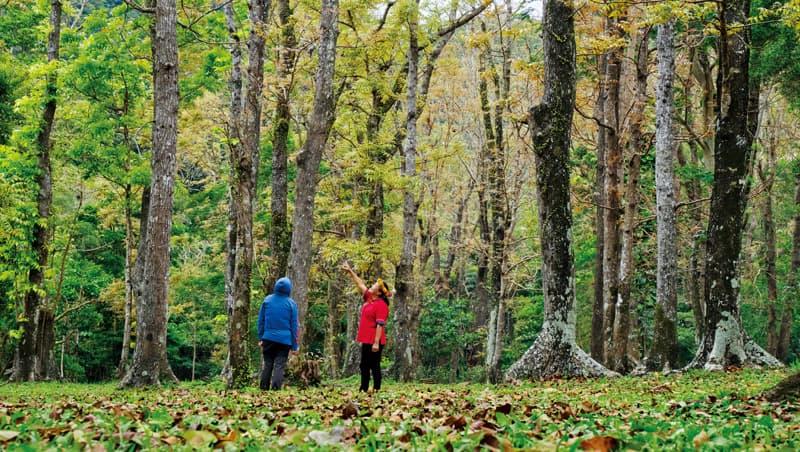 濕地旁的陸地上,整片桃花心木聚集成林,樹姿清秀,漫步其中感受悠悠涼意。