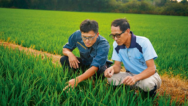 神農獎得主陳燕卿與返鄉耕田的兒子陳士賢,經常一起討論種稻心得,農田邊就是他們的最佳會議場所。