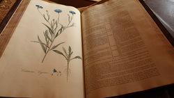 台灣古籍拍賣會首度現身 18世紀英國最美植物圖鑑《倫敦花卉》
