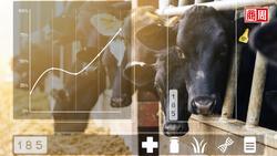 動物也要被「臉部辨識」!中國打算利用監控科技,提升食物產量