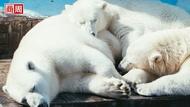 科學家:地球正進入「第六次大滅絕」?全球生物數量減少近70%!
