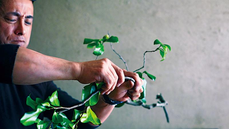 若覺得綠葉過於搶眼,要果斷下手摘除,才能有好的花藝展現。