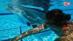 「超逼真機器海豚」亮相!能成水族館虐待動物爭議的解方嗎?
