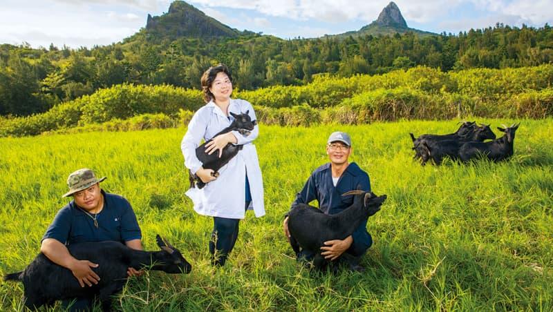 台灣黑山羊經畜試所復育成功,助理研究員曾楷扉(圖中)是關鍵人物之一。
