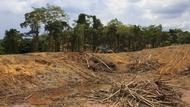 砍伐量創12年新高!亞馬遜森林一年內消失「40個台北市」面積