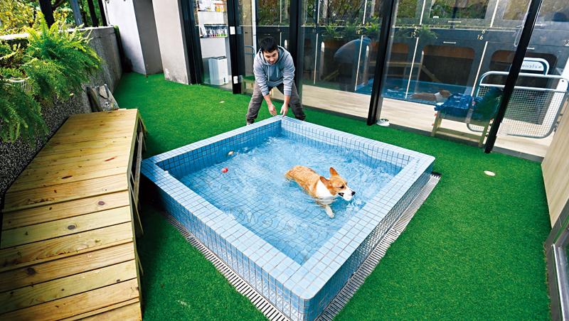 礁溪寒沐酒店提供適合毛小孩泡的溫泉池,水溫設定在攝氏35度,以符合狗狗的體溫。