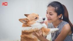 韓國「智慧項圈」能分辨狗狗5種情緒,首爾大學:準確率達90%