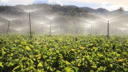 德國之聲》連水也被拿來做交易…有利可圖?恐釀糧食供應危機