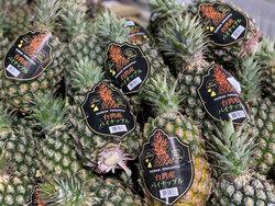 不吃日本草莓,要台灣鳳梨!知名度暴漲,日超市水果營業額漲1.5倍