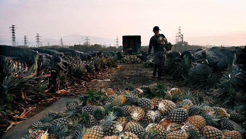 一顆鳳梨的跨國戰爭