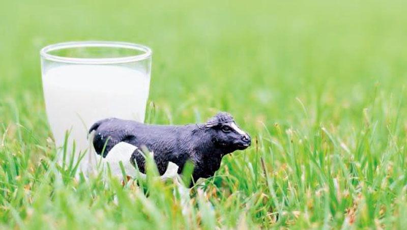 畜牧業占全球溫室氣體排放達14.5%,人造奶和生技食品問世,或可達到環境保護及緩解糧食短缺壓力