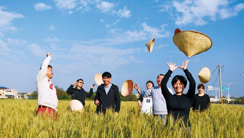 一群青農復育小麥五年,以文創翻轉麥寮印象