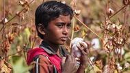印度疫情掀起棉花漲勢!比抵制新疆棉還嚴重...台廠再迎來轉單?